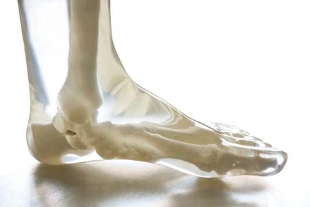 distal: X-Ray pie fantasma, transparente aislado en fondo blanco