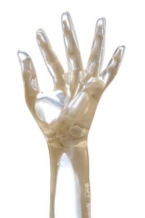 distal: Mano X-Ray Phantom, transparente aislado en fondo blanco Foto de archivo