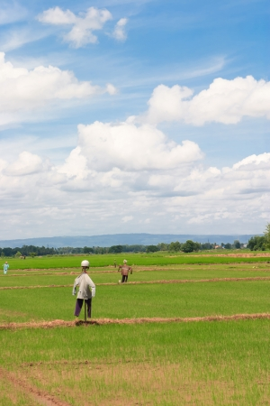 Scarecrow in Rice Paddy field and white cloudy on blue sky  photo