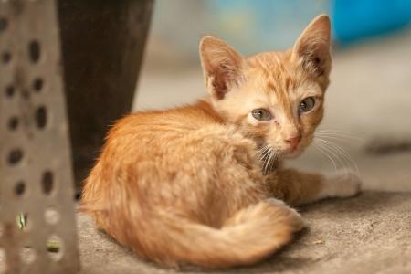 Orange tabby cat sleep on floor  Stock Photo