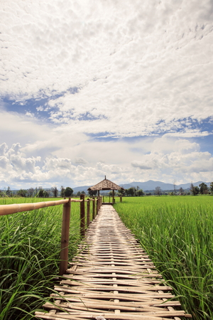 Hut and rice field in nature, Thailand Imagens