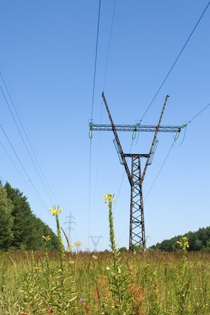 High voltage line and flowers