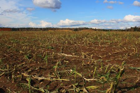Autumn harvested field Stock Photo