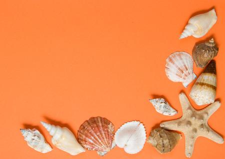 Seashells on a sheet of shaggy paper