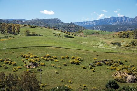 Typical Andalusian landscape near Ronda town in May
