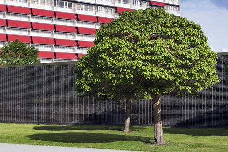 residential district: Wall and trees in a residential district