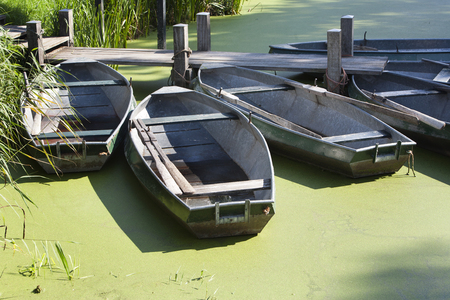 rowboats: Rowboats moored at a jetty