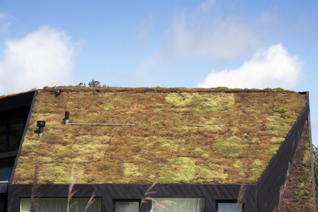 ecological: Energy saving ecological moss roof