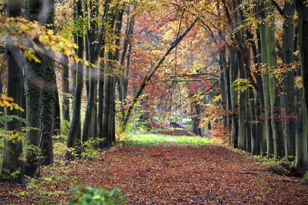 arden: Lane in the woods that is no longer used