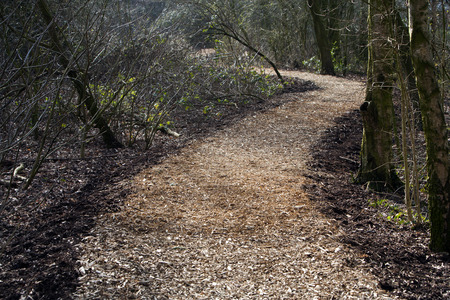 wood chip: Wood chip footpath in a park