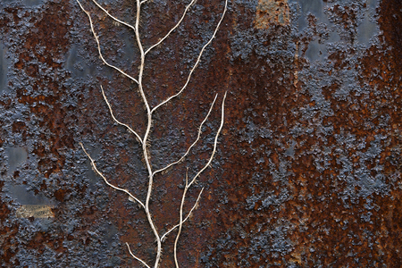 transience: Close-up of a black painted rusty metal background with a dead plant on it.