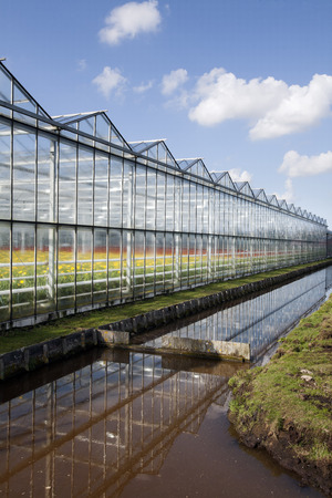 ijssel: Greenhouse with red and yellow flowers Stock Photo