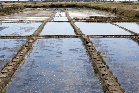 briny: Sea Salt basins in Noirmoutier in France