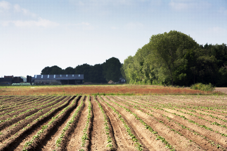 planted: Just planted vegetables field Stock Photo