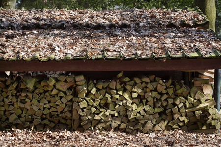 under fire: Chopped fire logs drying under a roof in open air. Roof and ground are coated with dead leaves.