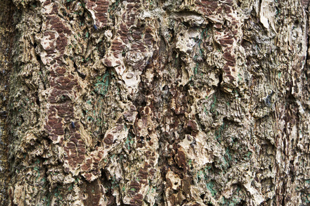 sow: Bark background with two sow bugs on the left side Stock Photo