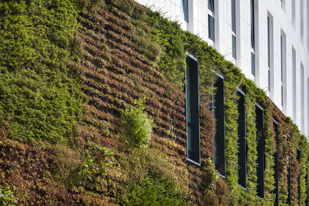 Building with green ecological wall covered with plants in Rotterdam in the Netherlands