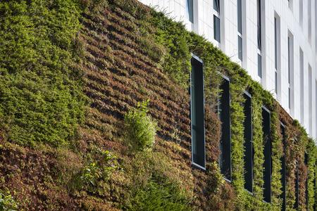 Bouwen met groene ecologische muur bedekt met planten in Rotterdam in Nederland