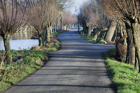 Asphalt country road with pollard willows in winter in the Netherlands