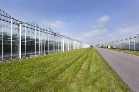 Greenhouses and an asphalt road in Westland in the Netherlands