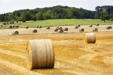 Golden rolls of hay on the fields in France Stockfoto