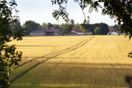 Tractor tracks in the golden fields to village Louvemont in France Stockfoto