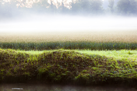 Misty cereal field landscape at dawn in France