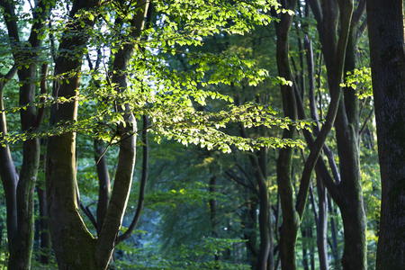 Speulderbos or forest of the dancing trees is located on the Veluwe in the Netherlands Stockfoto