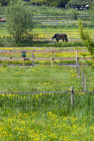 Horse in a fenced pasture in Rotterdam in the Netherlands Stockfoto
