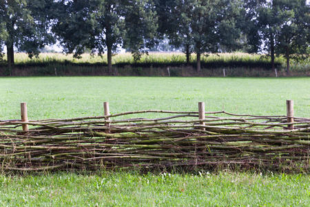 Wattle fence with a corn field in the background in Voorst in the Netherlands