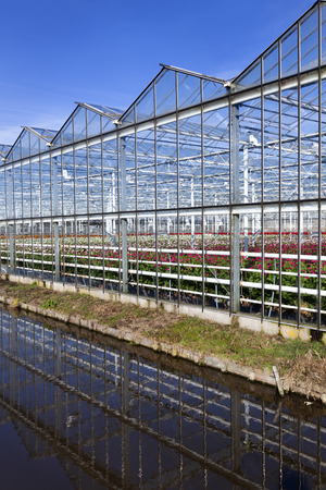 Exterior of a greenhouse with flowers in the Netherlands