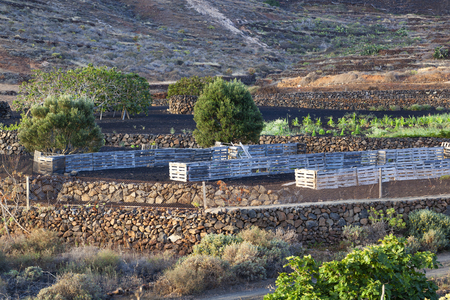 Agriculture on a mountain slope in Tabayesco on Lanzarote
