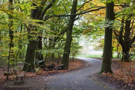 Footpath and trees in autumn in park Kralingse Bos in Rotterdam in the Netherlands Stock Photo