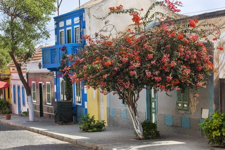 Paved street with colorful houses and flowering tree in Bofareira on the island Boa Vista of Cape Verde