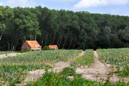 Tracks and houses near a forest edge in Zeeuws Vlaanderen in the Netherlands Stockfoto