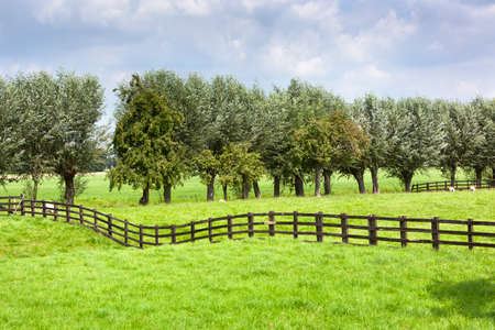 Dutch rural grass landscape with a wooden fence in Meerkerk in the Netherlands