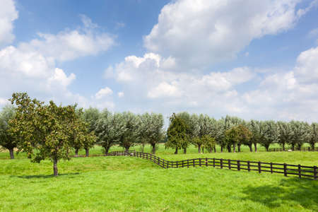 Dutch rural grass landscape with a wooden fence and a pear tree in Meerkerk in the Netherlands