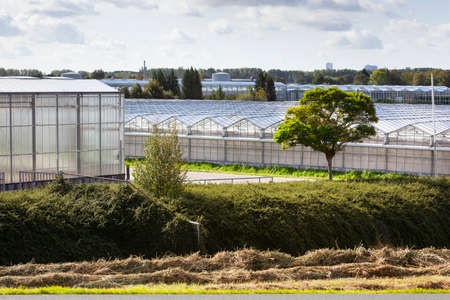 Greenhouse exteriors in Westland in the Netherlands Stockfoto