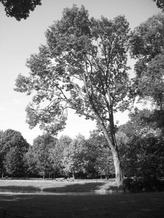 Munchen tree