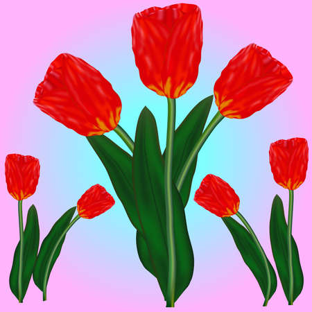 beautyful: The beautyful tulips for your images of holidays