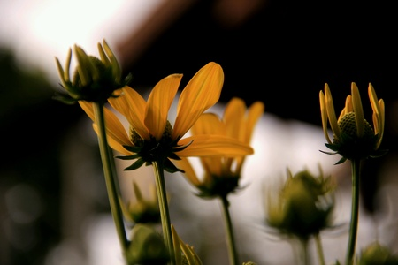 closeup: Yellow flowers
