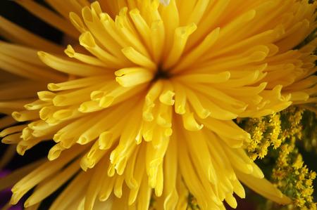 flor: Flor amarilla Editorial