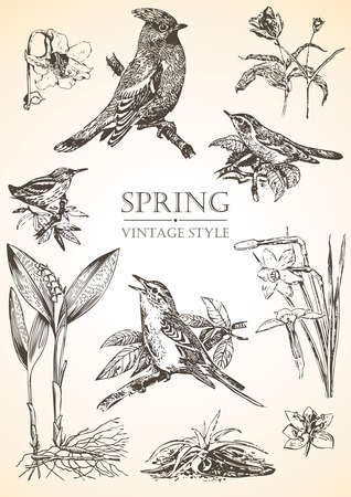 spring vintage illustrations of birds and flowers