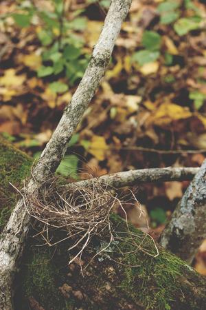 nido de pajaros: Las aves anidan en las ramas cubiertas de musgo Foto de archivo