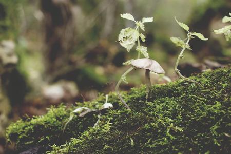 mushroom on mossy log