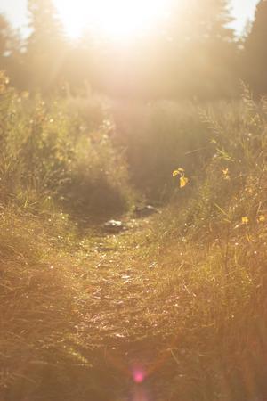 glades: Sunny Glen