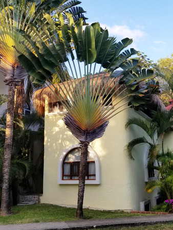 Colorful tropical Caribbean style house with palm tree at the entrance. Playa del Carmen, Mexico
