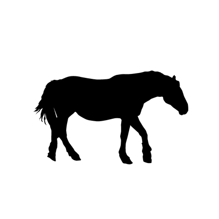 horse vector black silhouette from the side isolated on white background 向量圖像