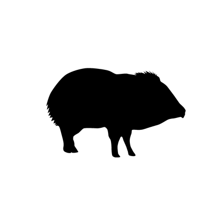 peccary black vector silhouette isolated on white background  イラスト・ベクター素材