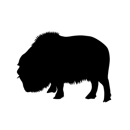 muskox (Ovibos moschatus) black vector silhouette isolated on white background